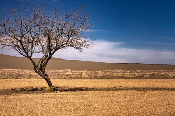 Tree Spirits 4 2 Photography Art | TheSpiritographer