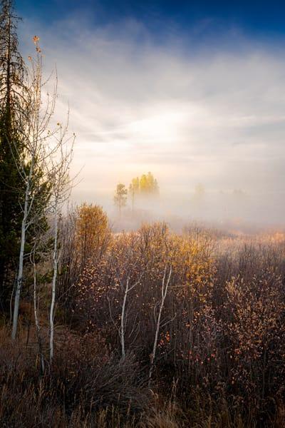 Tree Spirits 7 2 Photography Art | TheSpiritographer