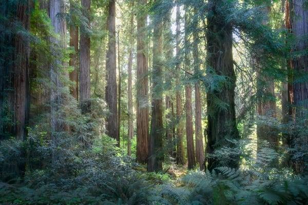 Sentient Forest