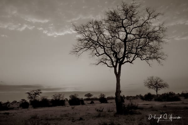 "The Tree Becomes Your Focus"", PhotoDiscoveries, Africa, Sunset"