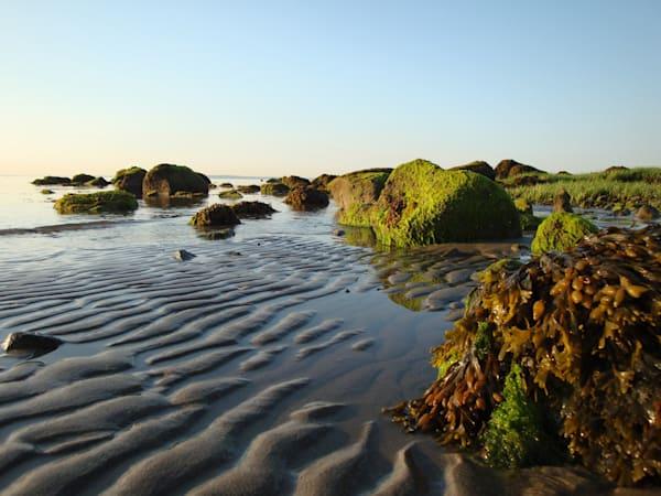 Mossy Island Art   capeanngiclee