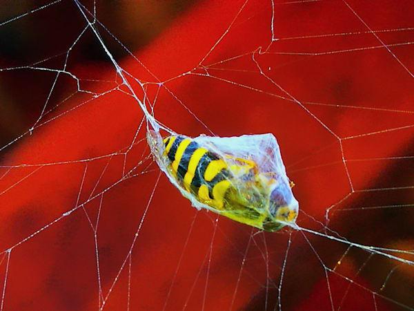 The spider's prey