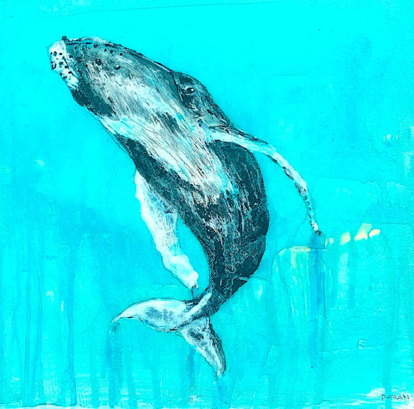 Swimming Humpback
