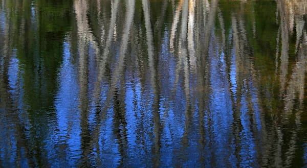 Photo imagery of trees reflected in the dark waters of a northern lake for sale by Michael Toole