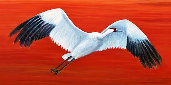 MPhillip-Whooping-Crane