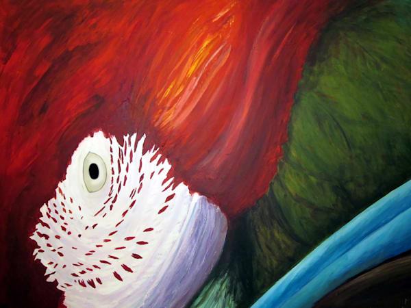 Scarlet Macaw   Art   Branson West Art Gallery - Mary Phillip