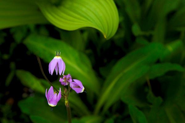 Garden Of Eden 5 Photography Art   TheSpiritographer