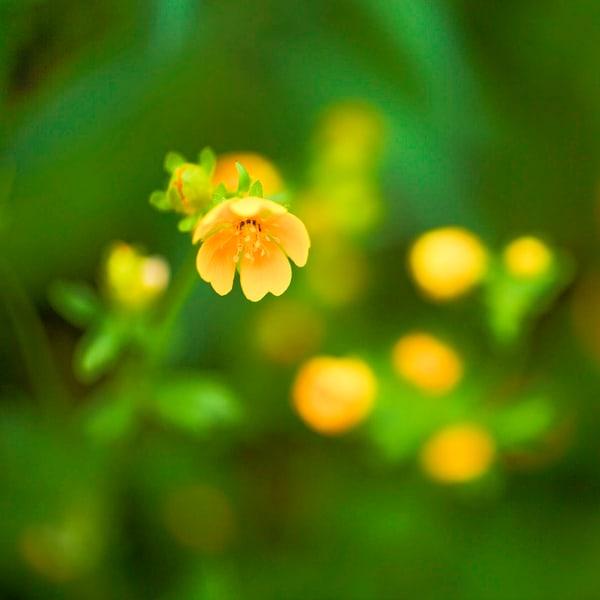 Garden Of Eden 6 Photography Art   TheSpiritographer