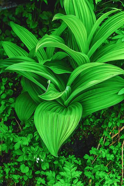 Garden Of Eden 4 Photography Art   TheSpiritographer