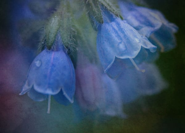 Bluebells is a delicate spring flower from my gardens/Shop Fine Art by An Artist's View Photography