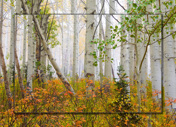 Aspen Pastel 3 D Photography Art | Whispering Impressions
