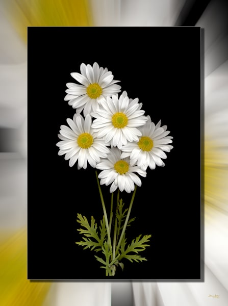 Daisy Bunch 3 D Photography Art | Whispering Impressions