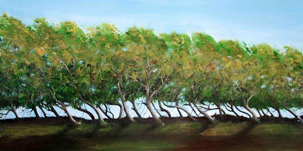 MPhillip-windswept-trees