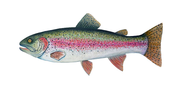 MPhillip-Rainbow-Trout-Lake