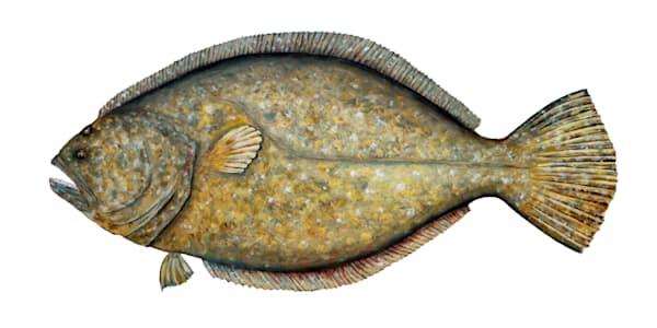 MPhillip-Flounder-Slam