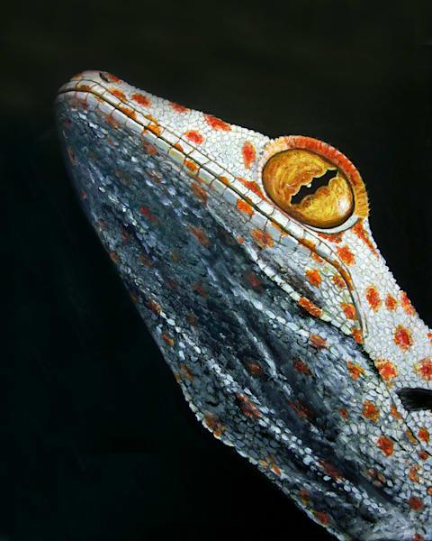 MPhillip-White-Gecko-on-Black