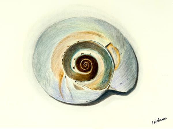 Nautilus, From an Original Colored Pencil Painting