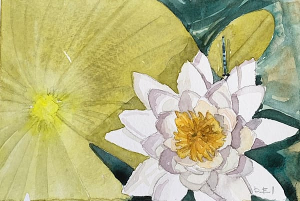 watercolor, michigan, water-lily