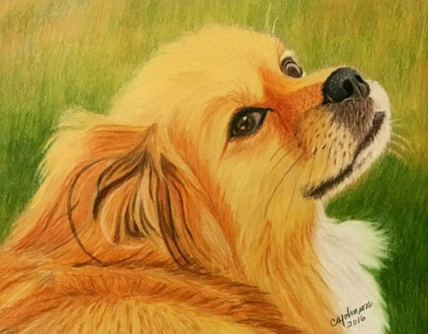 Pet Portraits, Original Colored Pencil Painting