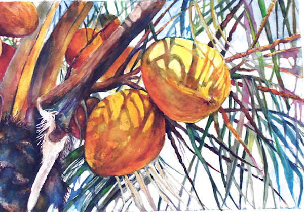 Coconuts On Tree, From an Original Watercolor Painting