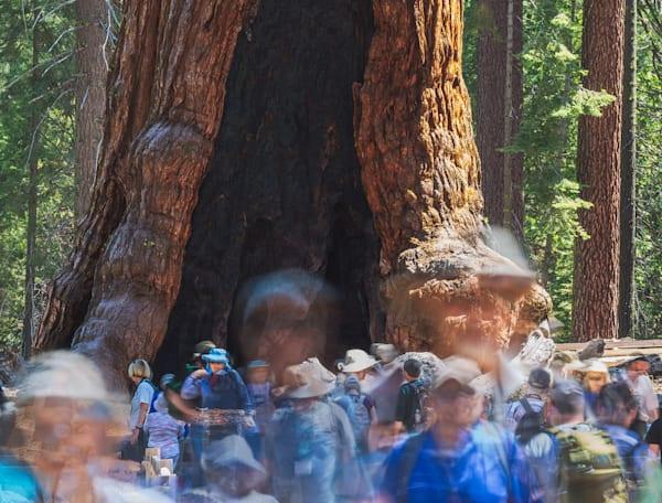 Human/Nature Two   Yosemite National Park by Charlotte Gibb