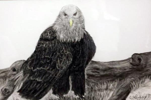C Perkins   Eagle Art | Branson West Art Gallery - Mary Phillip