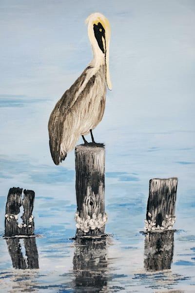CPerkins-Lone-Pelican