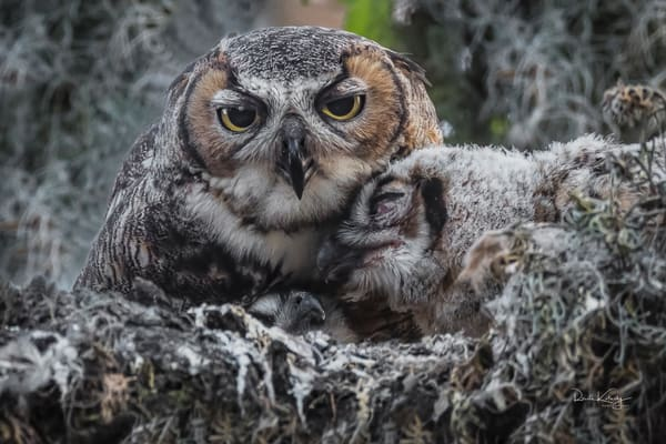 Mother Owl and Owlets