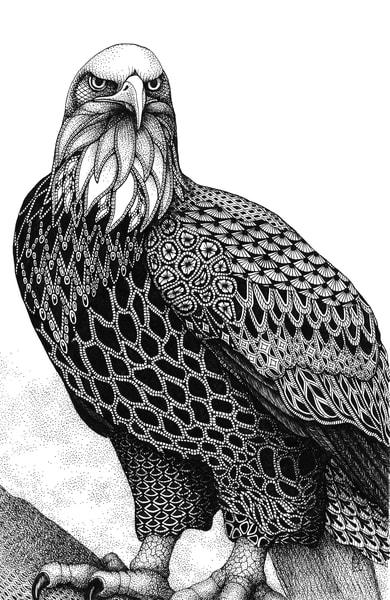 "Bald Eagle | Kristin Moger ""Seriously Fun Art"""