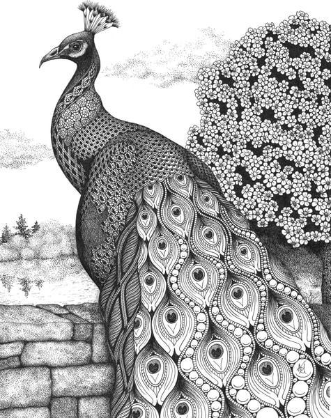 "Posh Peacock   Kristin Moger ""Seriously Fun Art"""