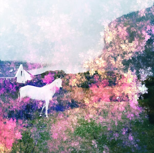 White Horse 3 Art   photographicsart