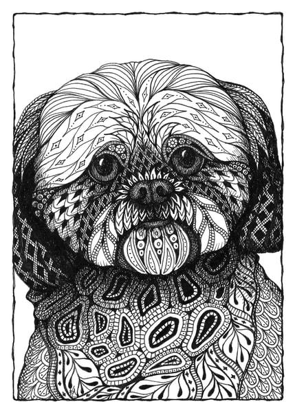 "Brodie (Shih Tzu) | Kristin Moger ""Seriously Fun Art"""