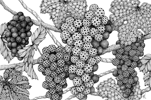 "Grapes On The Vine | Kristin Moger ""Seriously Fun Art"""