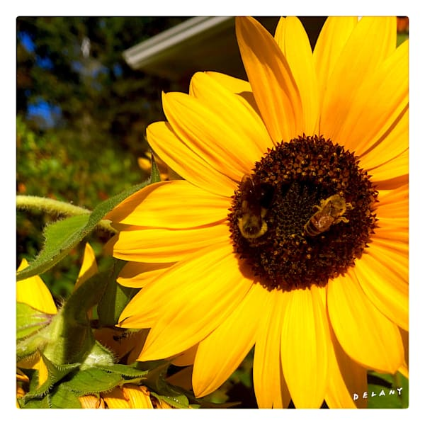 Honey Bee Bumble Bee Dance Instagram