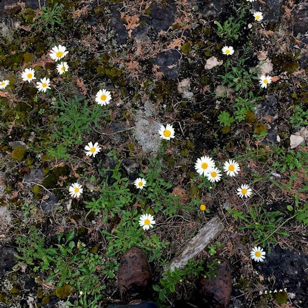 Sandfield Wildflowers 1 Instagram