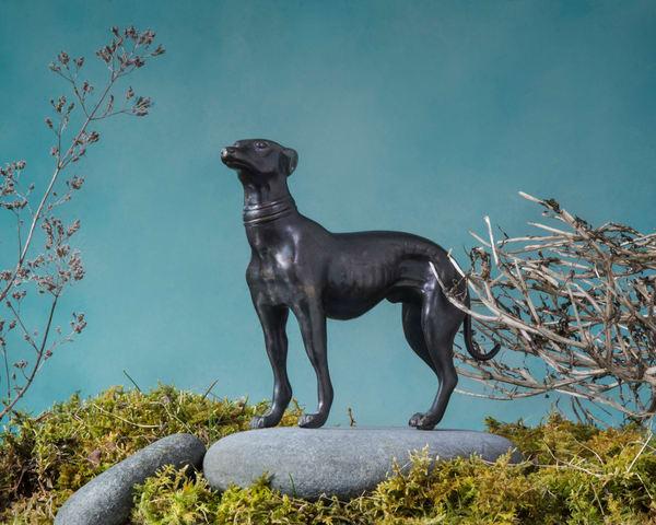 Hero Dog Photography Art | Kim Bova Photography