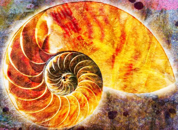 The Fibonacci Glow Photography Art | Mark Steele Photography Inc