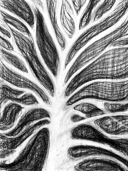 Browse Unique Sycamore Tree Wall Art Prints by Iowa Artist Marie Stephens