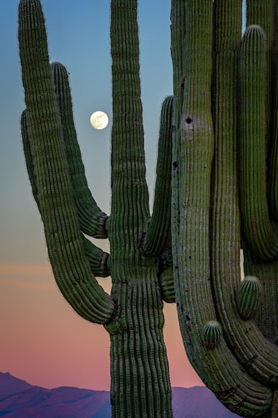 Saguaro & The Full Moon | Shop Photography by Rick Berk