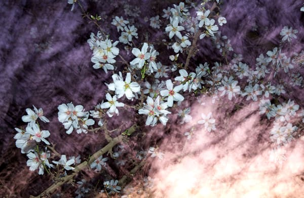 Almond Blossom Galaxy Photography Art | Josh Kimball Photography