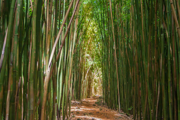 LightSea Images - Bamboo Cathedral