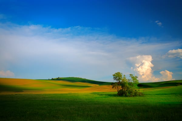 Fields of Whitman County | Shop Photography by Rick Berk
