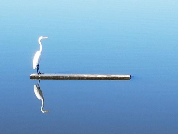 Crane Photography Art | David Louis Klein