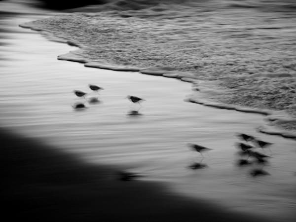 Snowy Plovers Photography Art | David Louis Klein