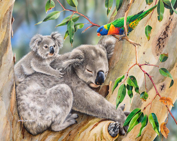 Making new friends - Koala with her joey and a rainbow lorikeet