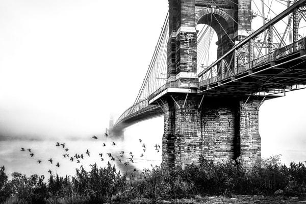 Birds In Flight Photography Art | Studio 221 Photography