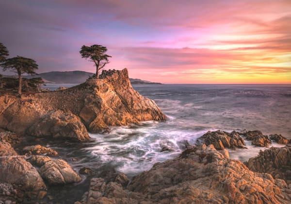 Lone Cypress Tree Photography Art | Studio 221 Photography