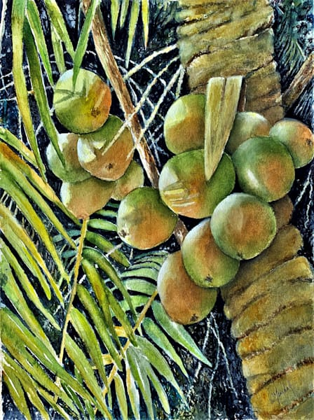 Coconut Palm, From an Original Watercolor Painting