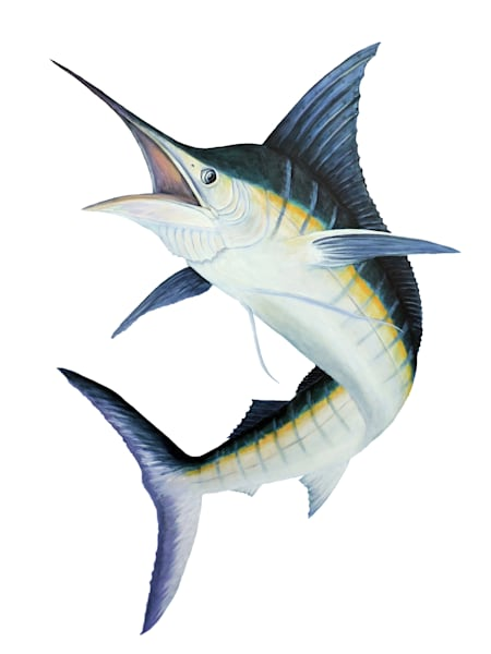 MPhillip-blue-marlin-canvas