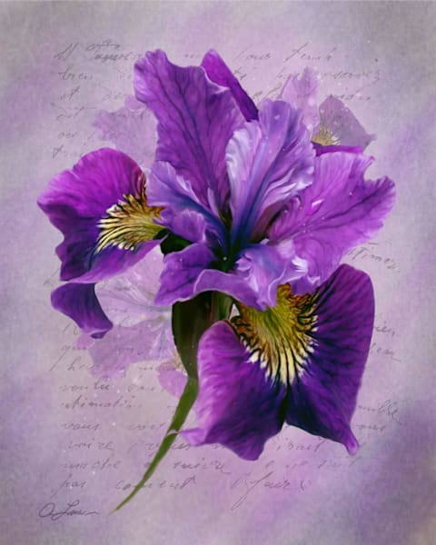 Iris is a spring beauty from my garden/ Shop fine art photography by An Artist's View Photography